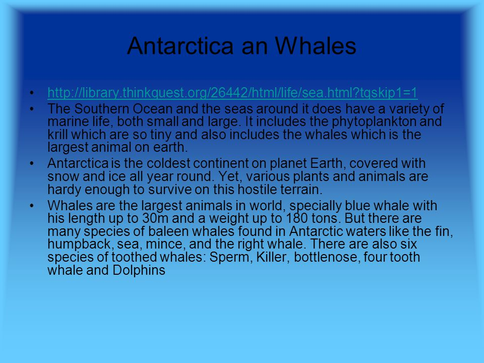 Antarctica an Whales http://library.thinkquest.org/26442/html/life/sea.html tqskip1=1 The Southern Ocean and the seas around it does have a variety of marine life, both small and large.