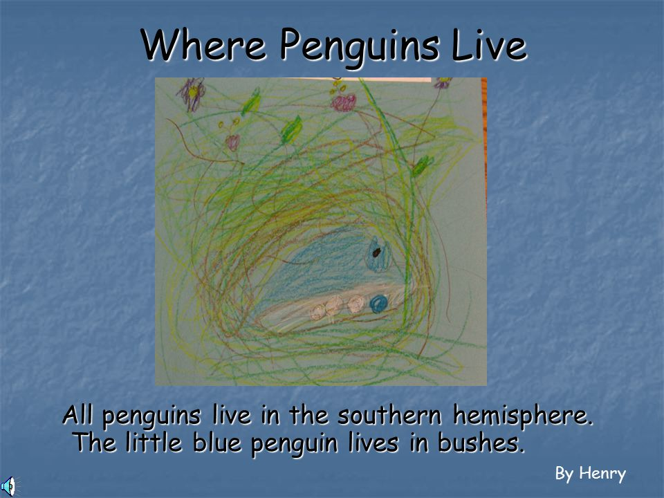 The little blue penguin, or the fairy penguin, is the smallest penguin.