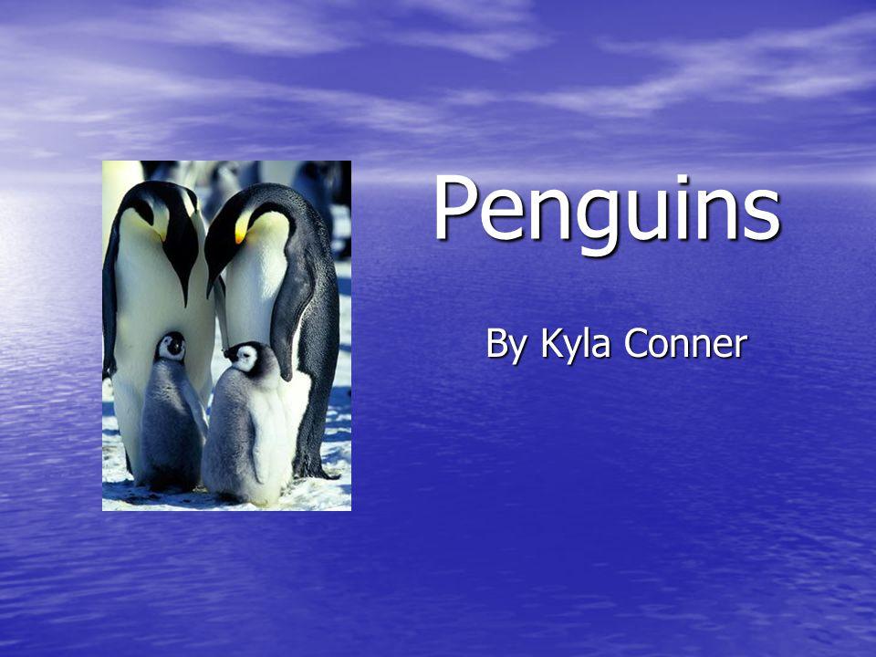 Penguins By Kyla Conner