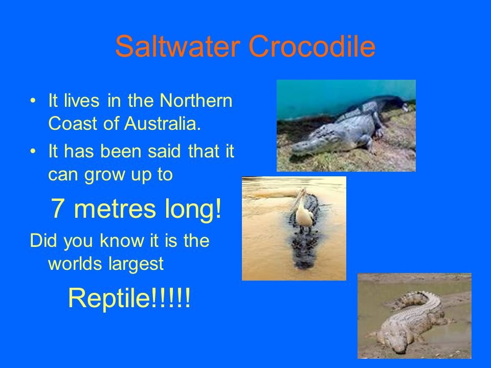 Saltwater Crocodile It lives in the Northern Coast of Australia. It has been said that it can grow up to 7 metres long! Did you know it is the worlds