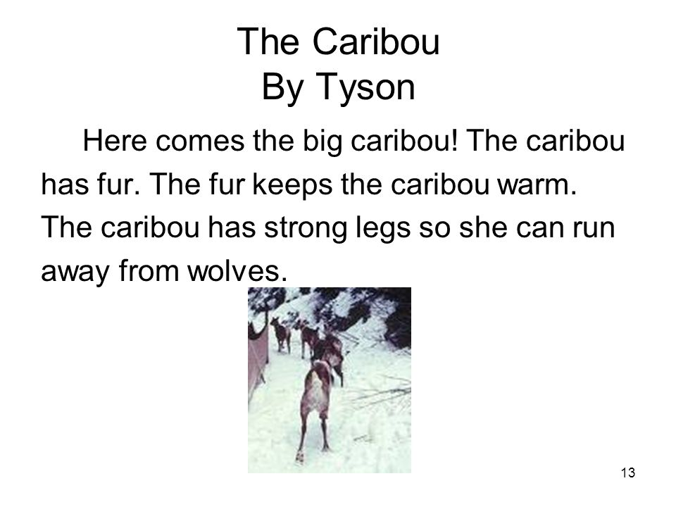 13 The Caribou By Tyson Here comes the big caribou.