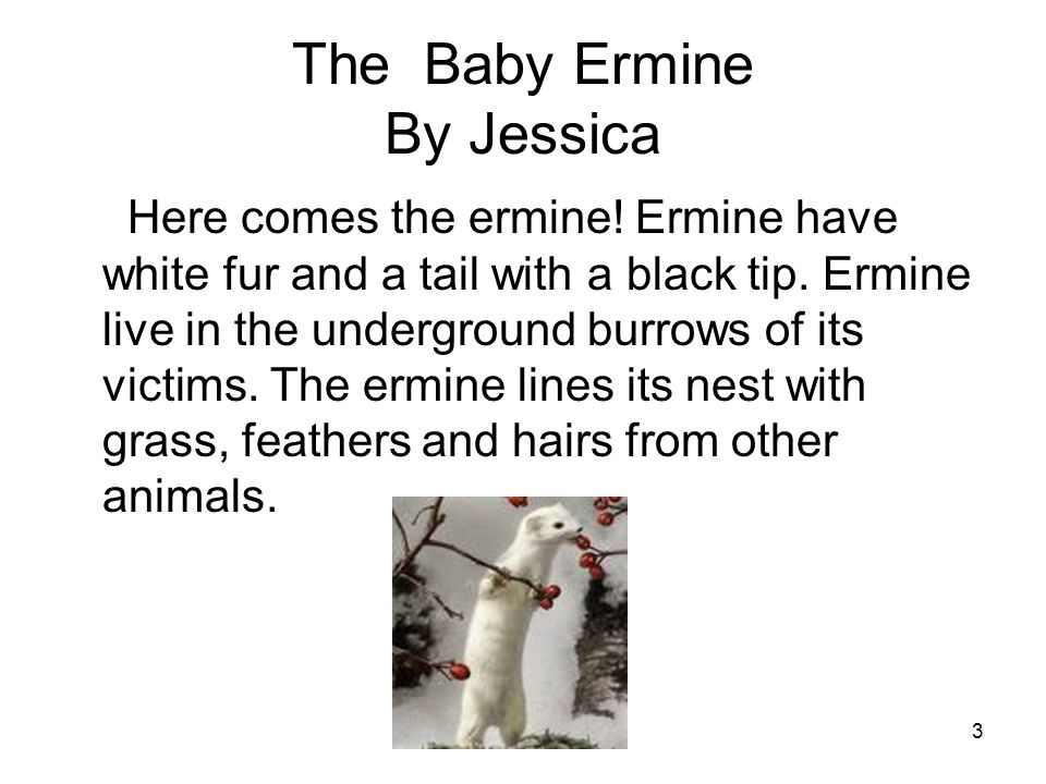 3 The Baby Ermine By Jessica Here comes the ermine.