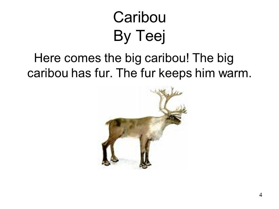4 Caribou By Teej Here comes the big caribou! The big caribou has fur. The fur keeps him warm.