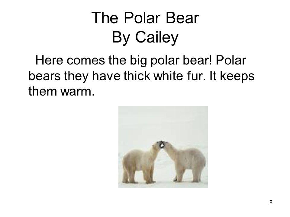8 The Polar Bear By Cailey Here comes the big polar bear.
