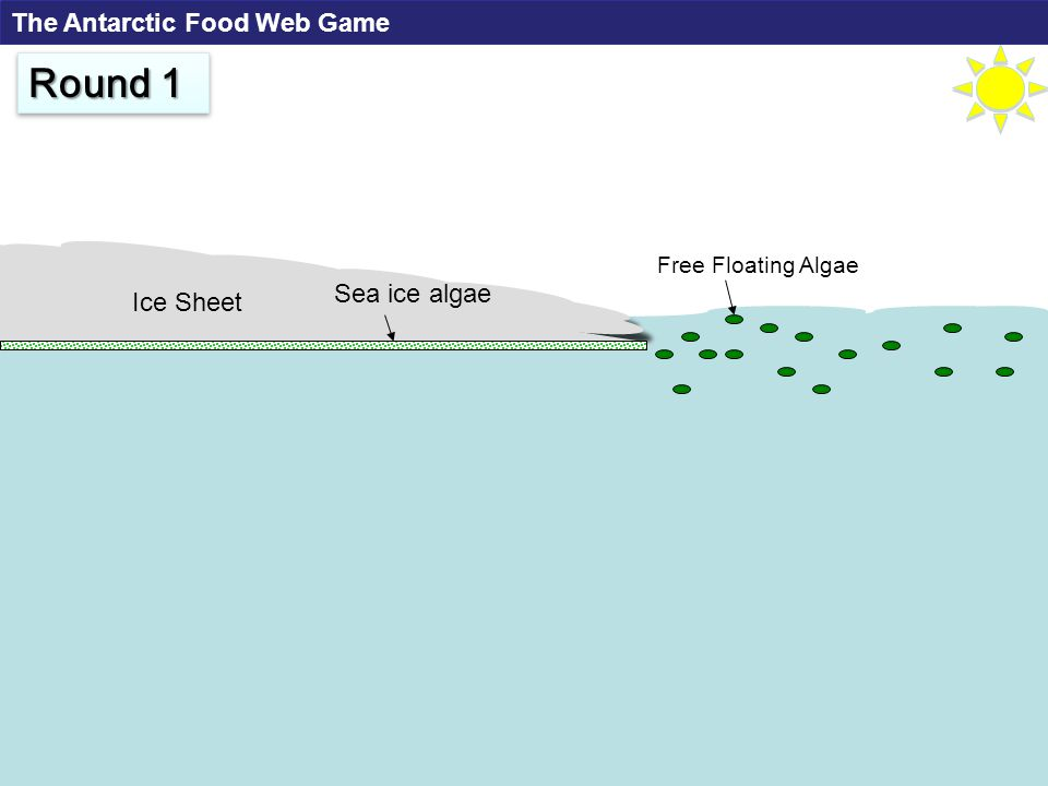 Free Floating Algae Ice Sheet Round 1 Sea ice algae The Antarctic Food Web Game