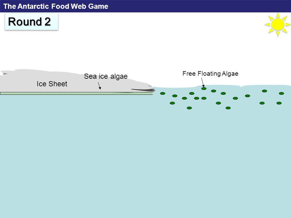 Free Floating Algae Ice Sheet Sea ice algae Round 2 The Antarctic Food Web Game