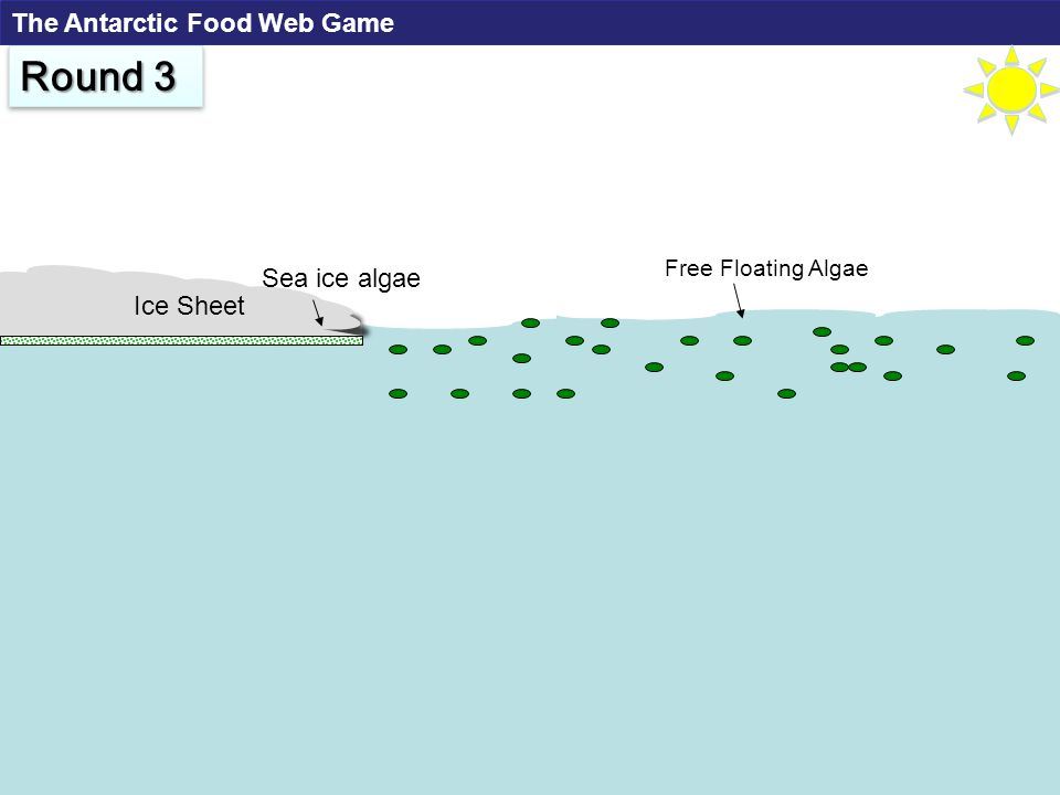 Free Floating Algae Ice Sheet Sea ice algae Round 3 The Antarctic Food Web Game