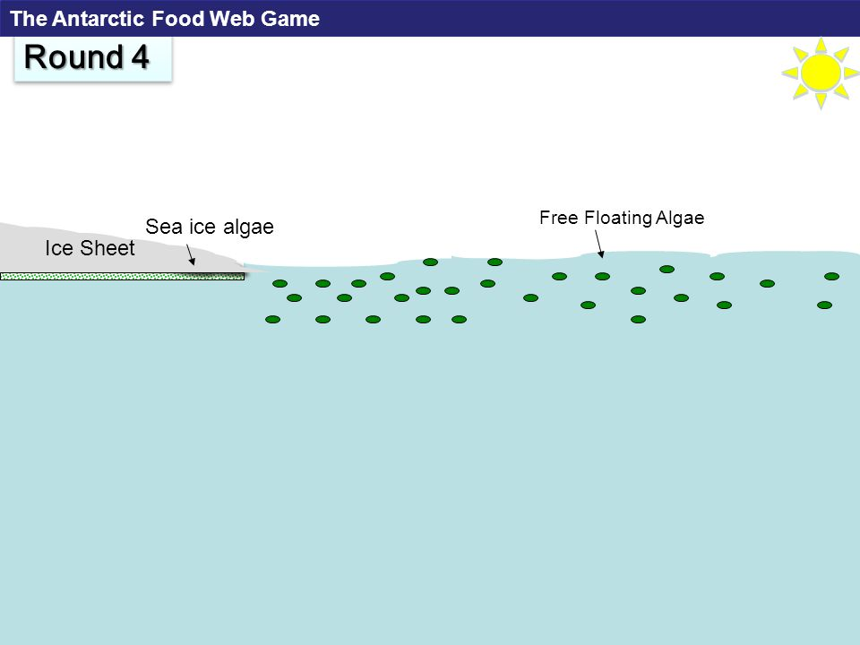 Free Floating Algae Ice Sheet Sea ice algae Round 4 The Antarctic Food Web Game