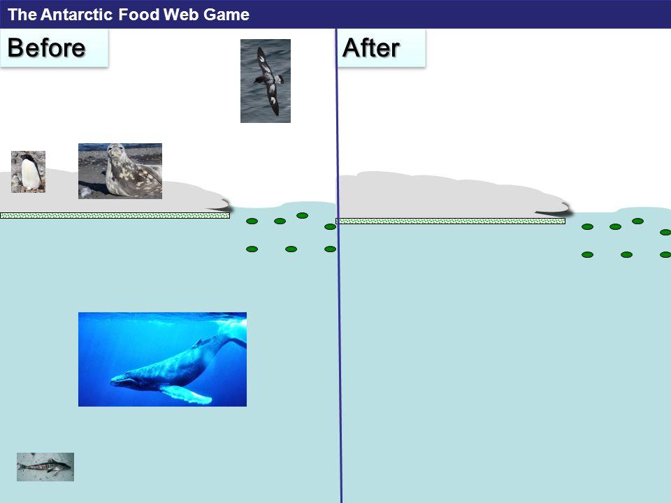 Adelie Penguin Weddell Seal Food Requirement: 5 krill per turn Food Requirement: 7 krill per turn The Antarctic Food Web Game