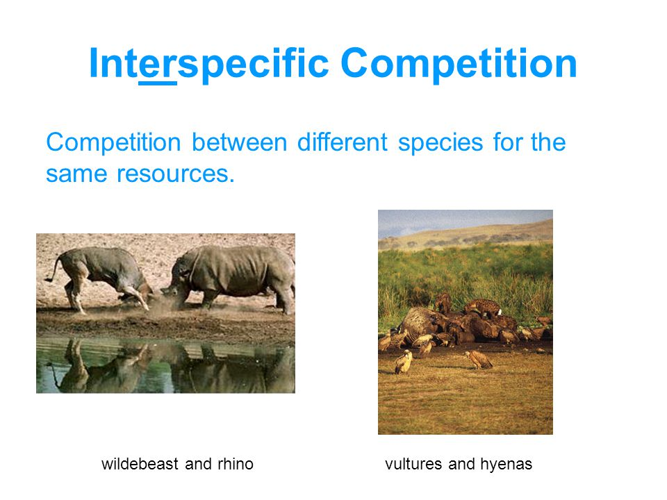 Interspecific Competition Competition between different species for the same resources.