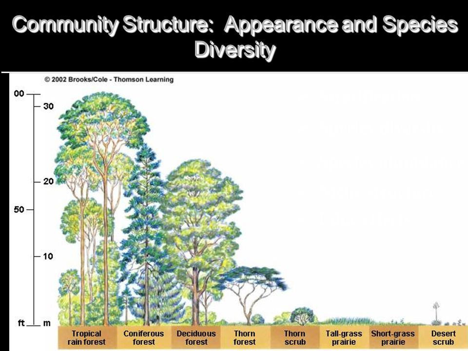 Community Structure: Appearance and Species Diversity  Stratification  Species diversity  Species abundance  Niche structure  Edge effects