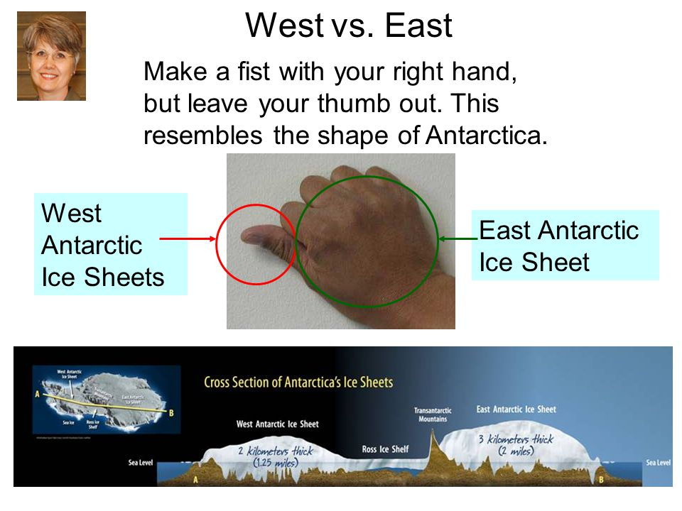 West vs. East Make a fist with your right hand, but leave your thumb out. This resembles the shape of Antarctica. West Antarctic Ice Sheets East Antar