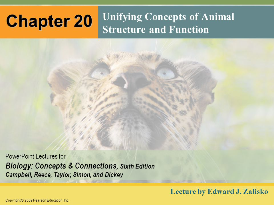 Copyright © 2009 Pearson Education, Inc. PowerPoint Lectures for Biology: Concepts & Connections, Sixth Edition Campbell, Reece, Taylor, Simon, and Di