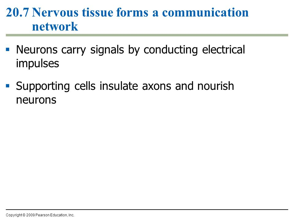 20.7 Nervous tissue forms a communication network  Neurons carry signals by conducting electrical impulses  Supporting cells insulate axons and nour