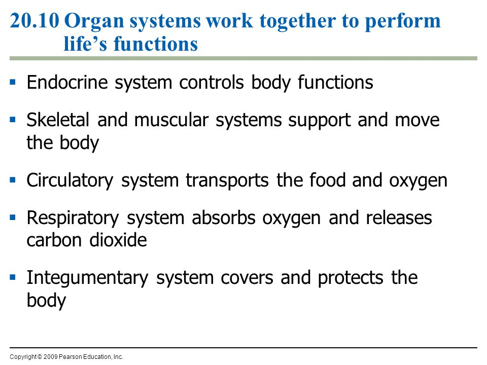  Endocrine system controls body functions  Skeletal and muscular systems support and move the body  Circulatory system transports the food and oxygen  Respiratory system absorbs oxygen and releases carbon dioxide  Integumentary system covers and protects the body Copyright © 2009 Pearson Education, Inc.
