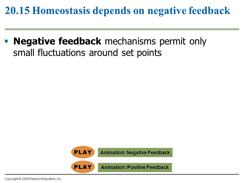  Negative feedback mechanisms permit only small fluctuations around set points 20.15 Homeostasis depends on negative feedback Copyright © 2009 Pearso