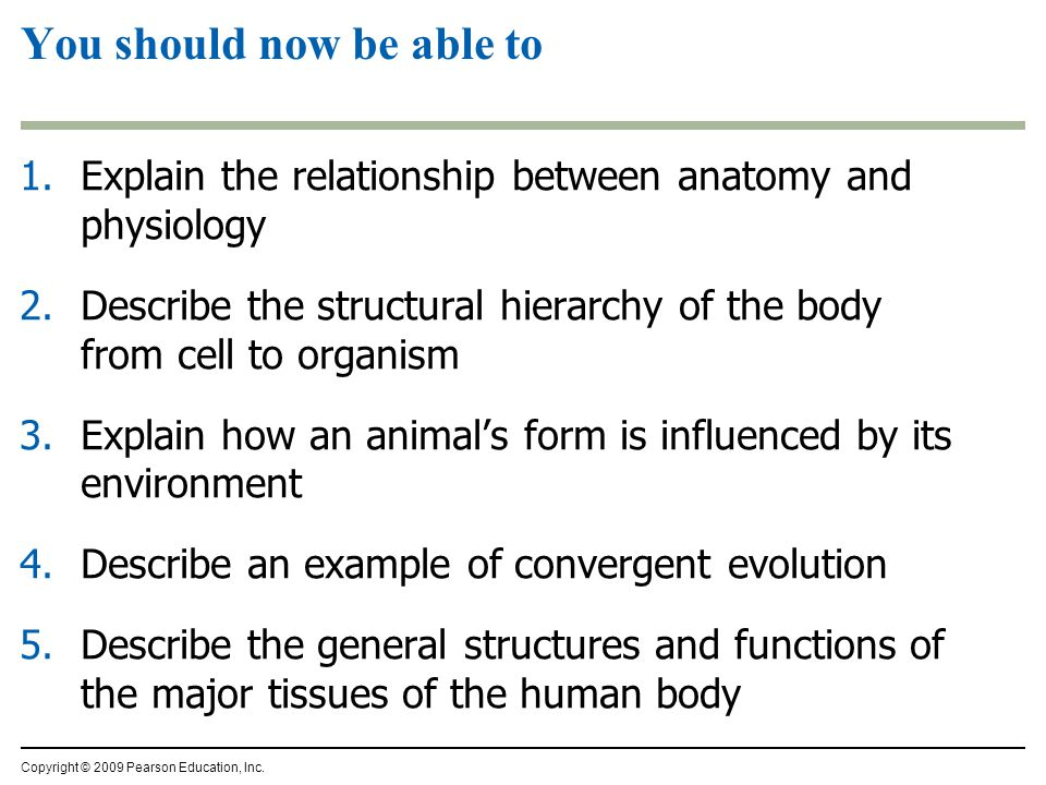You should now be able to 1.Explain the relationship between anatomy and physiology 2.Describe the structural hierarchy of the body from cell to organism 3.Explain how an animal's form is influenced by its environment 4.Describe an example of convergent evolution 5.Describe the general structures and functions of the major tissues of the human body Copyright © 2009 Pearson Education, Inc.