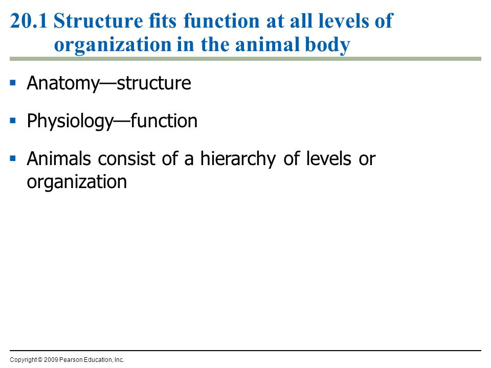 20.1 Structure fits function at all levels of organization in the animal body  Anatomy—structure  Physiology—function  Animals consist of a hierarchy of levels or organization Copyright © 2009 Pearson Education, Inc.