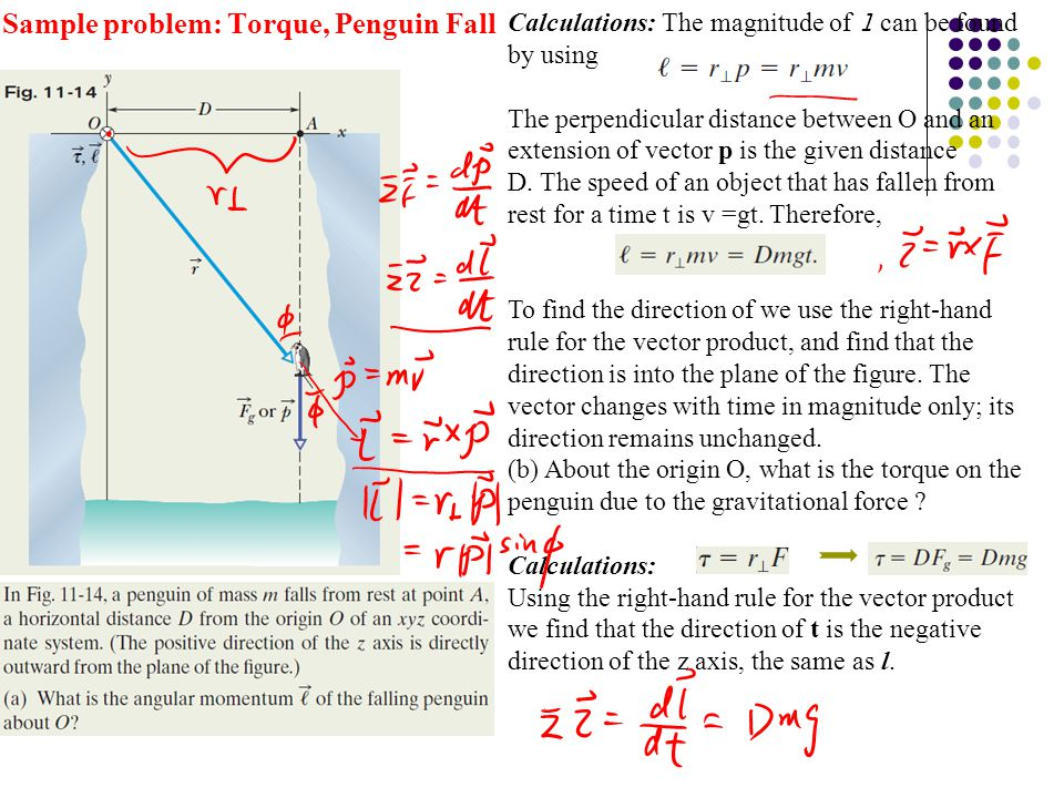 Sample problem: Torque, Penguin Fall Calculations: The magnitude of l can be found by using The perpendicular distance between O and an extension of v