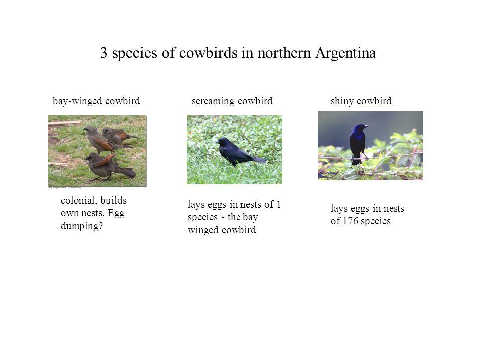 screaming cowbirdbay-winged cowbirdshiny cowbird lays eggs in nests of 176 species lays eggs in nests of 1 species - the bay winged cowbird colonial,
