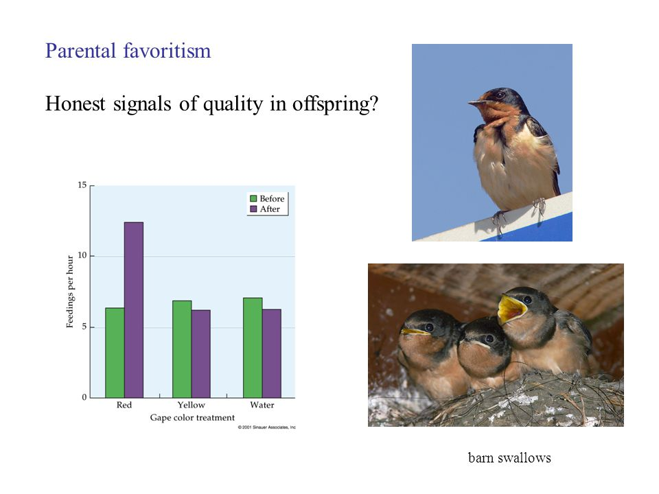 Parental favoritism Honest signals of quality in offspring barn swallows