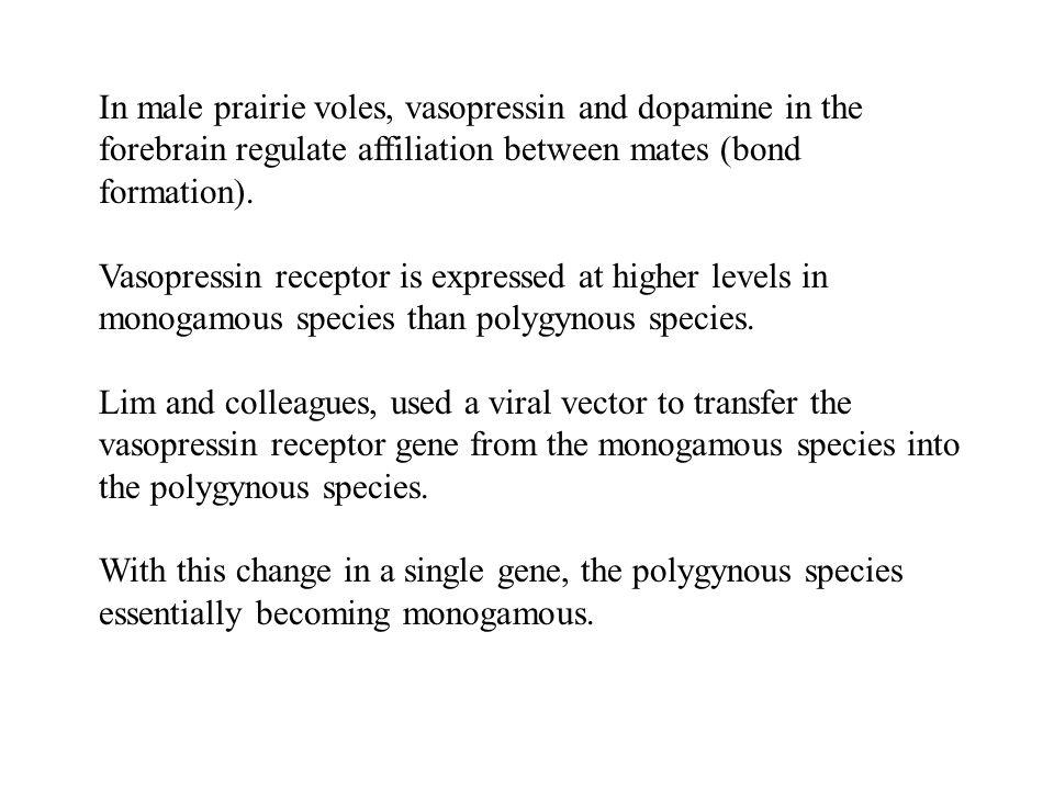 In male prairie voles, vasopressin and dopamine in the forebrain regulate affiliation between mates (bond formation). Vasopressin receptor is expresse