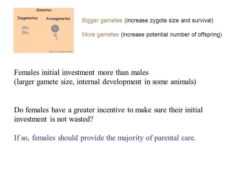 Females initial investment more than males (larger gamete size, internal development in some animals) Do females have a greater incentive to make sure their initial investment is not wasted.