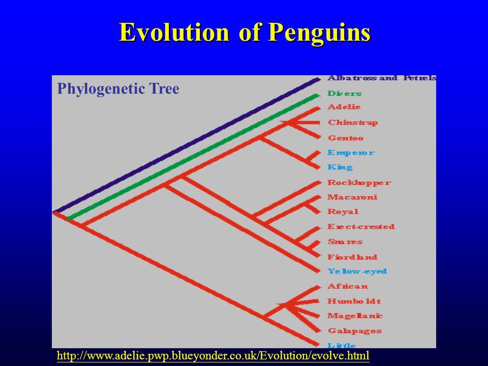 Evolution of Penguins http://www.adelie.pwp.blueyonder.co.uk/Evolution/evolve.html Phylogenetic Tree