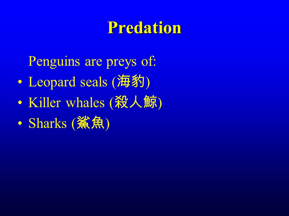 Predation Penguins are preys of: Leopard seals ( 海豹 ) Killer whales ( 殺人鯨 ) Sharks ( 鯊魚 )