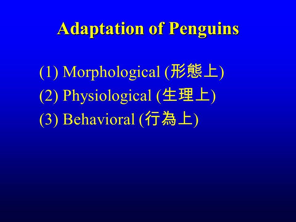 Adaptation of Penguins (1) Morphological ( 形態上 ) (2) Physiological ( 生理上 ) (3) Behavioral ( 行為上 )