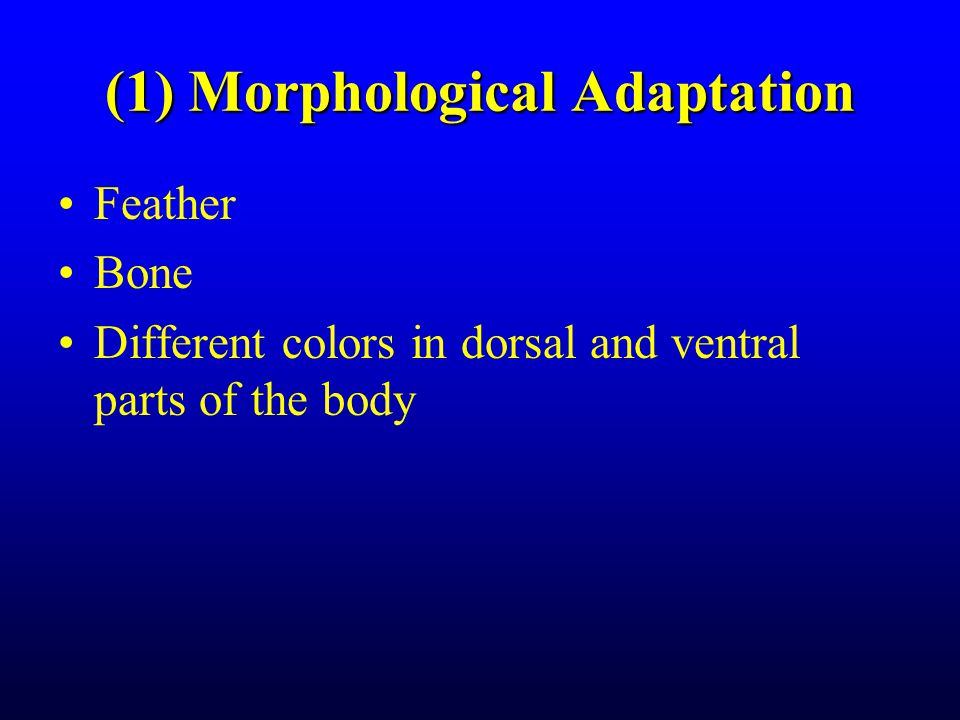 (1) Morphological Adaptation Feather Bone Different colors in dorsal and ventral parts of the body