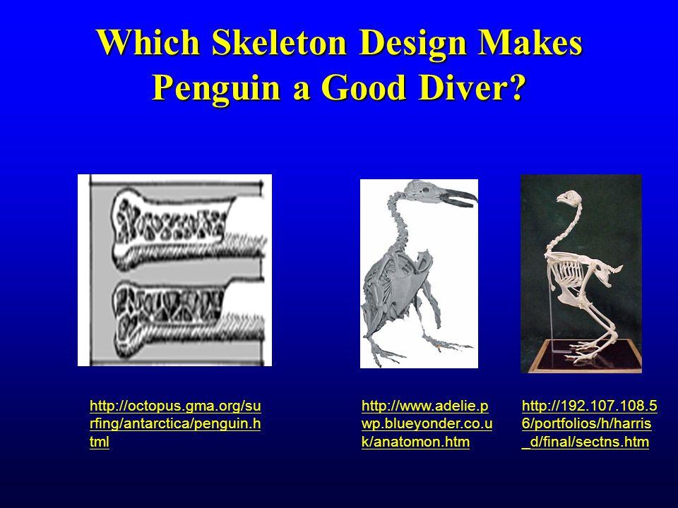 Which Skeleton Design Makes Penguin a Good Diver.