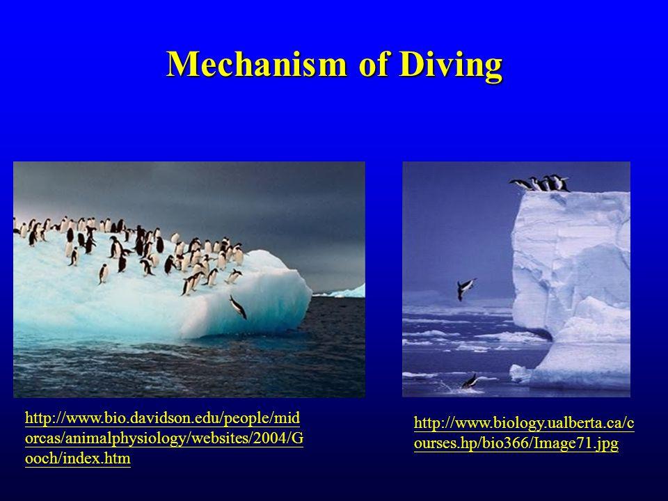 Mechanism of Diving http://www.biology.ualberta.ca/c ourses.hp/bio366/Image71.jpg http://www.bio.davidson.edu/people/mid orcas/animalphysiology/websites/2004/G ooch/index.htm
