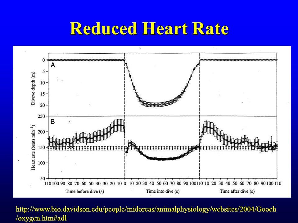 Reduced Heart Rate http://www.bio.davidson.edu/people/midorcas/animalphysiology/websites/2004/Gooch /oxygen.htm#adl