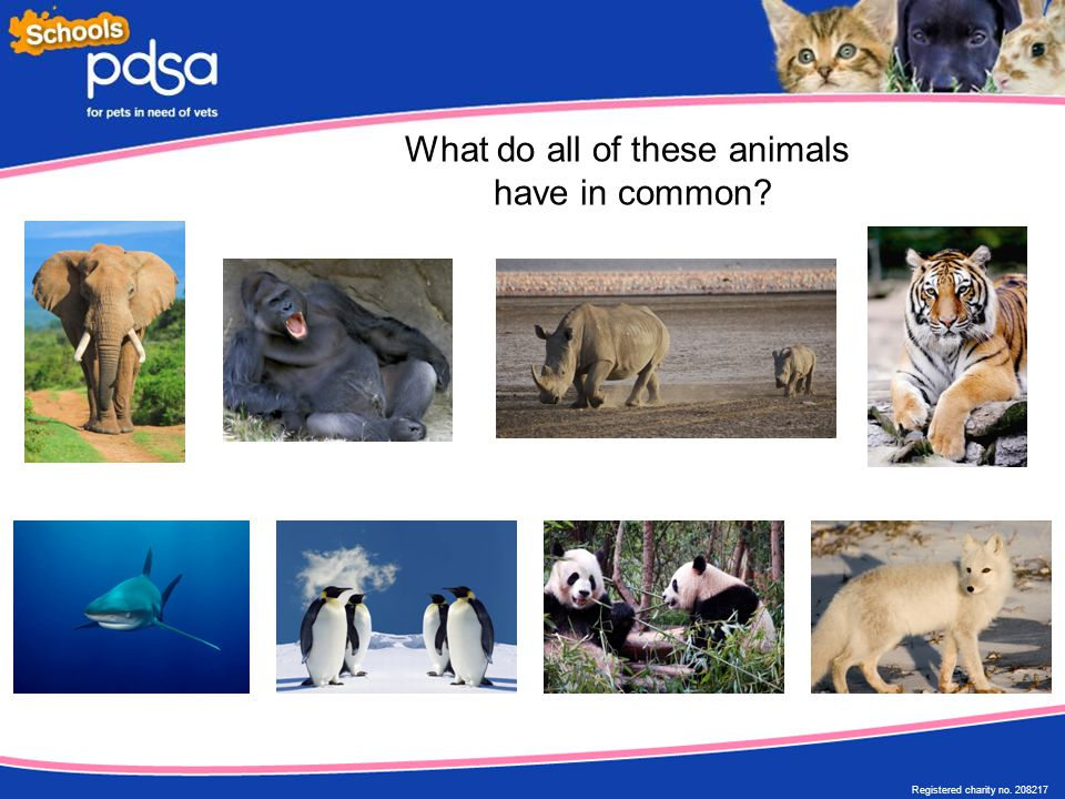 Registered charity no. 208217 What do all of these animals have in common