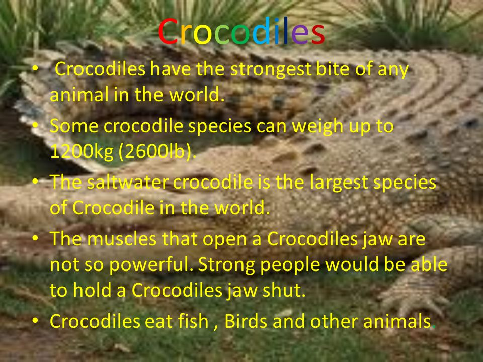 CrocodilesCrocodiles Crocodiles have the strongest bite of any animal in the world.