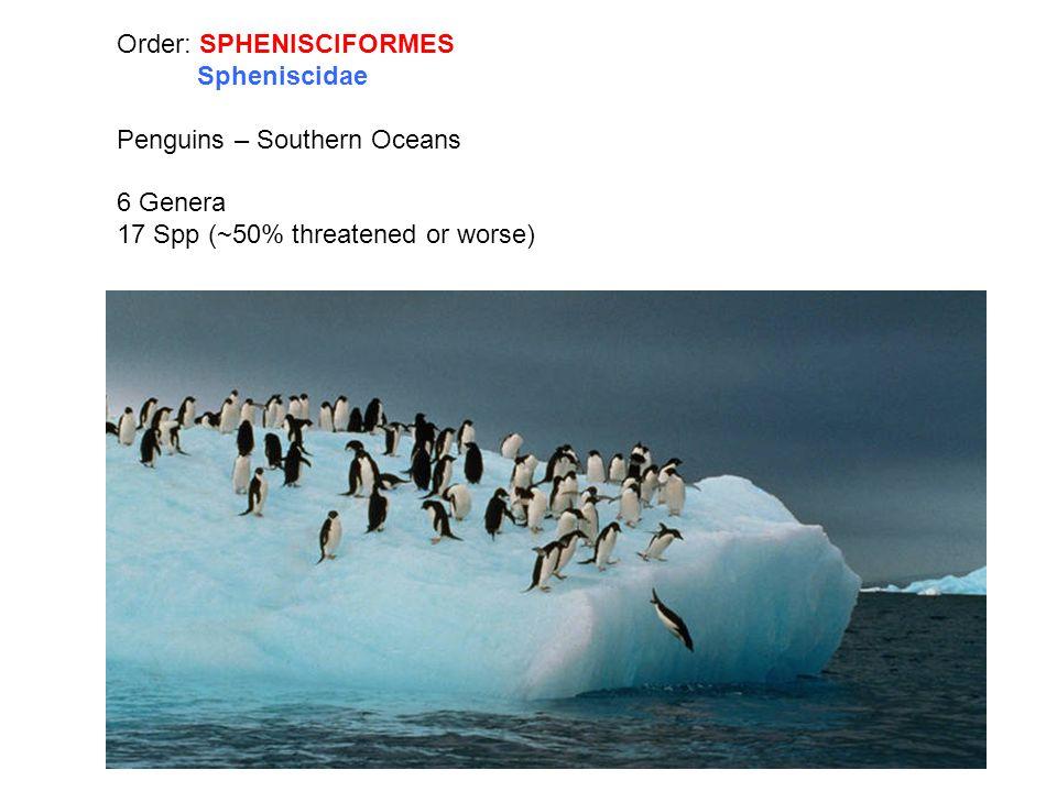Order: SPHENISCIFORMES Spheniscidae Penguins – Southern Oceans 6 Genera 17 Spp (~50% threatened or worse)