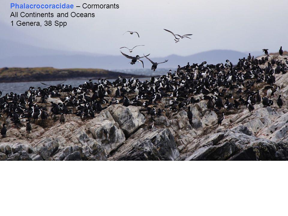 Phalacrocoracidae – Cormorants All Continents and Oceans 1 Genera, 38 Spp