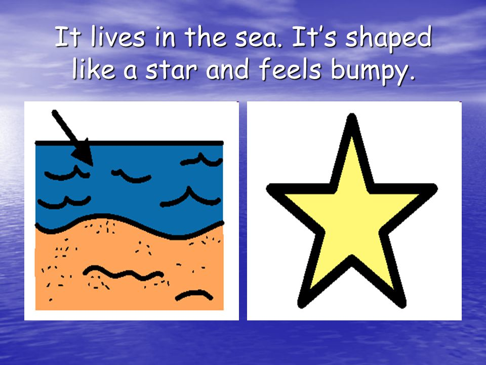 It lives in the sea. It's shaped like a star and feels bumpy.