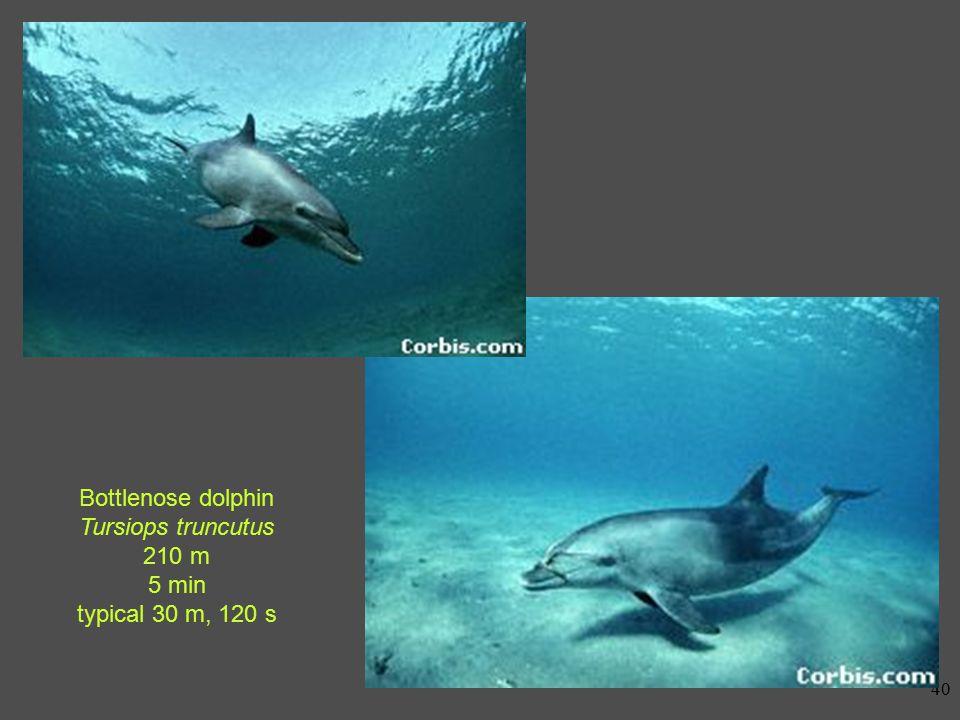 39 Weddell seal Leptonychotes weddellii > 600 m 82 min