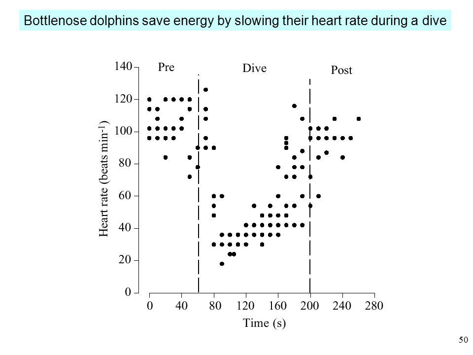 49 Diving mammals save ~ 28% of their energy by gliding (plexiglas dome)