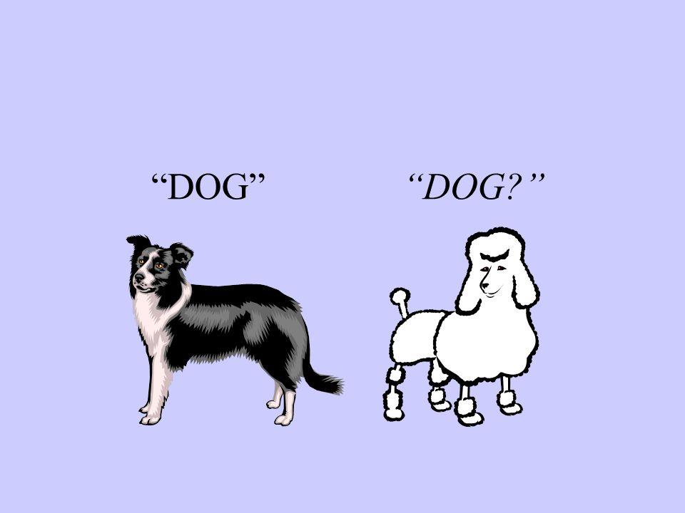 """""""DOG""""""""DOG?"""""""