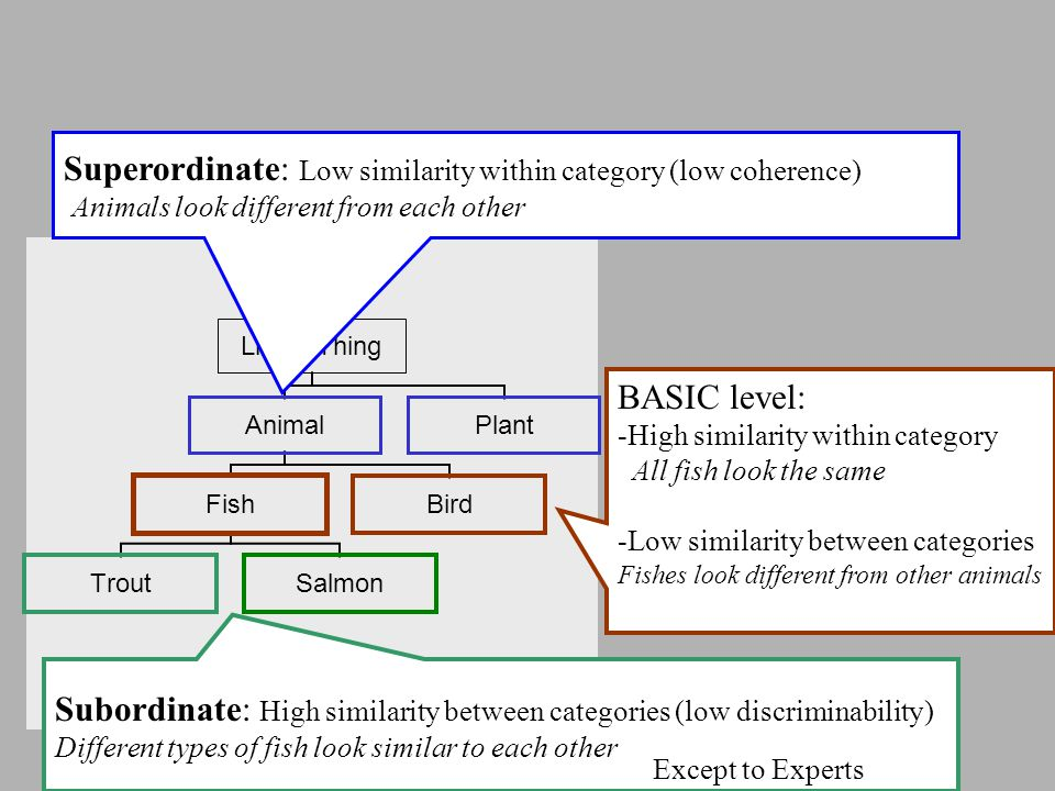 Superordinate: Low similarity within category (low coherence) Animals look different from each other BASIC level: -High similarity within category All fish look the same -Low similarity between categories Fishes look different from other animals Subordinate: High similarity between categories (low discriminability) Different types of fish look similar to each other Except to Experts