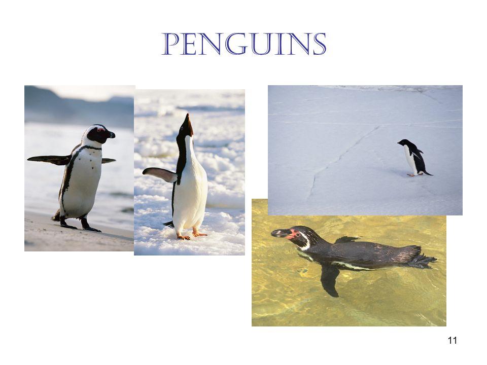 11 penguins
