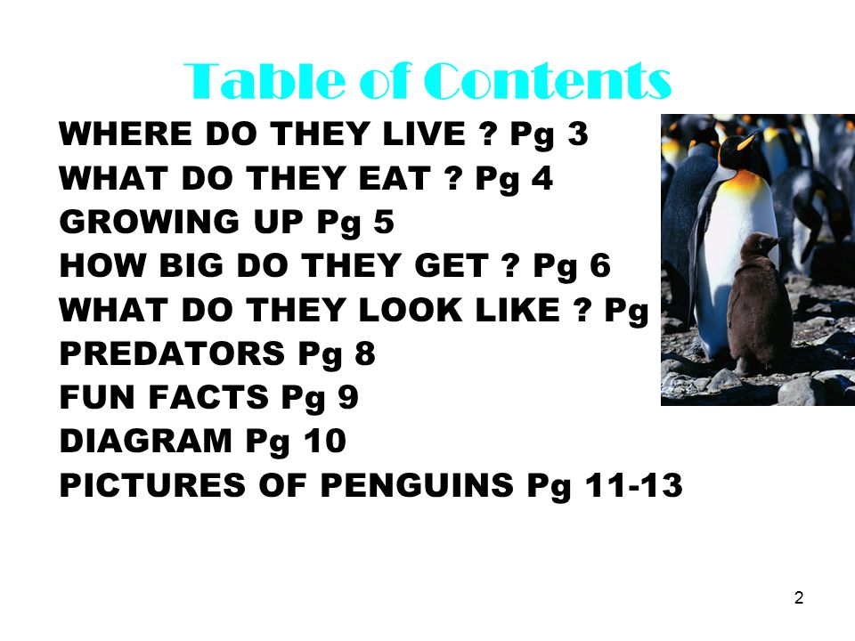 2 Table of Contents WHERE DO THEY LIVE . Pg 3 WHAT DO THEY EAT .