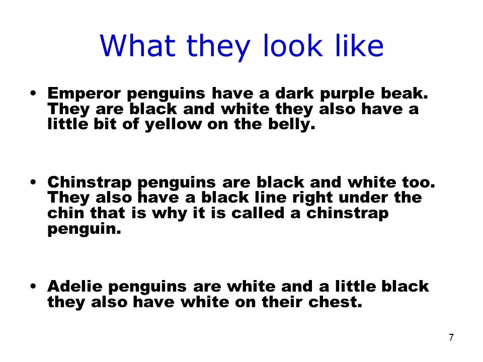 7 What they look like Emperor penguins have a dark purple beak.