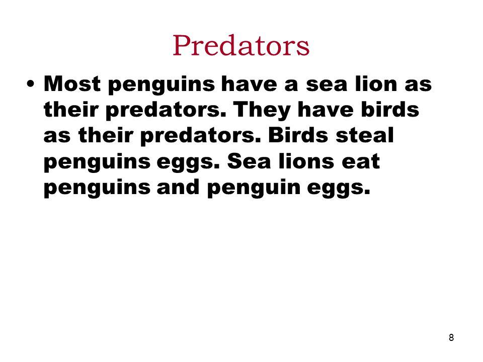 8 Predators Most penguins have a sea lion as their predators.