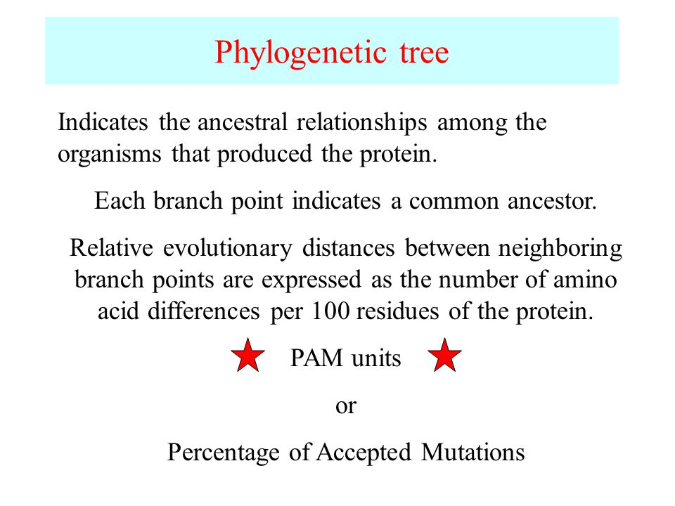 Phylogenetic tree Indicates the ancestral relationships among the organisms that produced the protein.