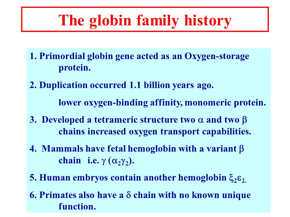 The globin family history 1. Primordial globin gene acted as an Oxygen-storage protein.