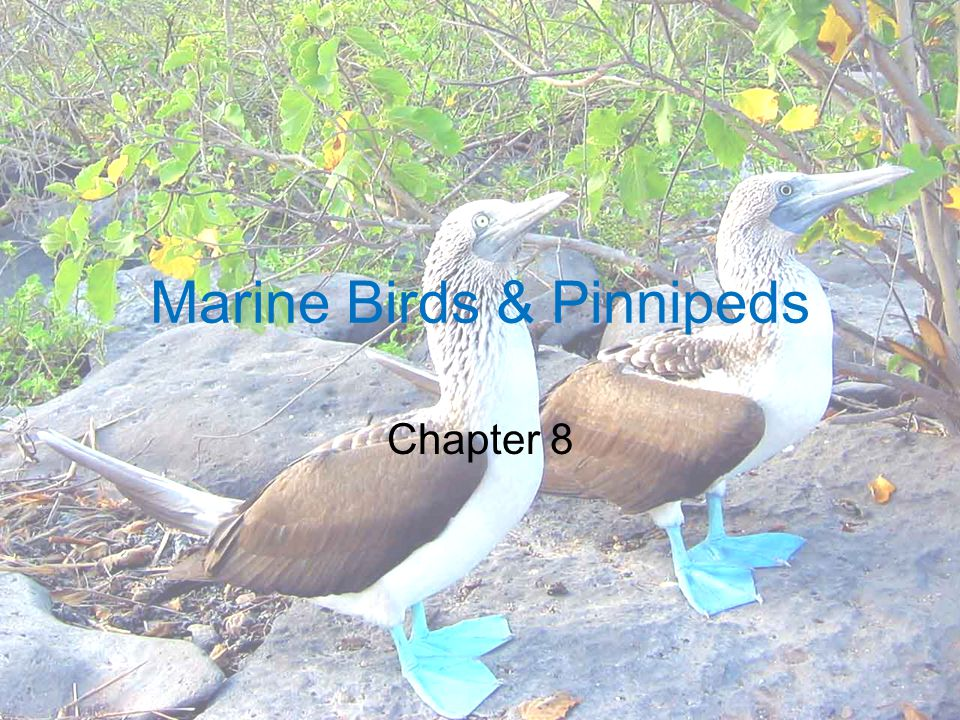 Marine Birds & Pinnipeds Chapter 8